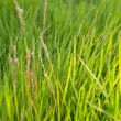 Background with green grass. — Stock Photo