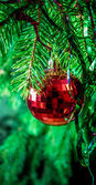 Red Christmas ball on fir branches — Stock Photo