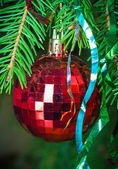 Red Christmas ball on fir branches_3 — Foto de Stock