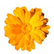 Stock Photo: Bright orange flower