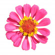 Stock Photo: Bright pink flower