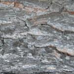 Tree bark, texture. — Stock Photo