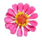 Bright pink flower — Stock Photo