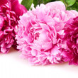 Peonies — Stock Photo #12565591