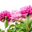 Peonies — Stock Photo #13701589