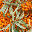 Sea-buckthorn — Stock Photo #13701787