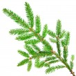 Green fir — Stock Photo #15332413