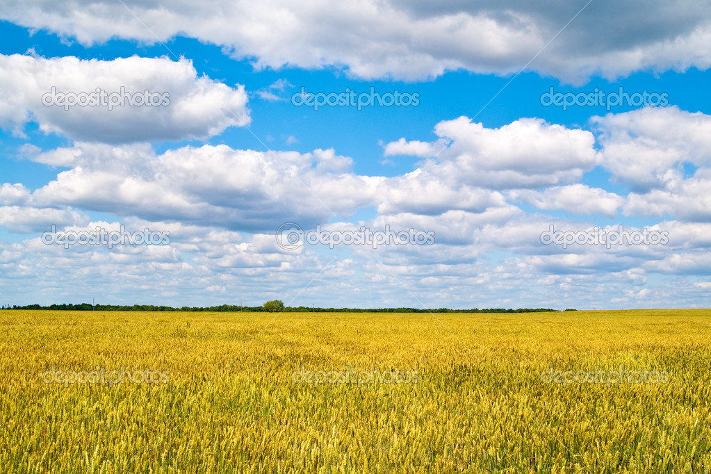 Beautiful landscape with blue sky and white clouds  Stock Photo #15332651