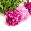 Peonies — Stock Photo #18969175