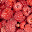 Stock Photo: Raspberries