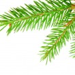 Green fir — Stock Photo #18969457