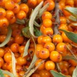 Sea-buckthorn — Stock Photo #20672107
