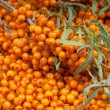 Sea-buckthorn — Stock Photo #20672175