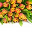 Tulips — Stock Photo #21302485