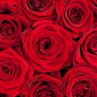 Red roses — Stock Photo #21686343