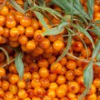 Sea-buckthorn — Stock Photo #21686877