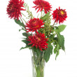 Red dahlias — Stock Photo #21691435