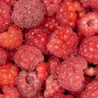 Raspberries - Foto de Stock