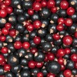 Redcurrant and  blackcurrant - Photo