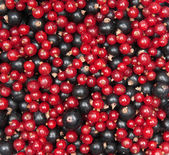 Redcurrant and blackcurrant — Stock Photo