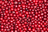 Red cherry — Foto de Stock