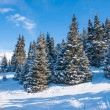 Winter landscape — Stock Photo #35040815