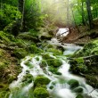Forest waterfall — Stock Photo #15549479
