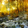 Autumn creek woods with yellow trees - Stock Photo