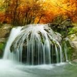 Autumn creek woods with yellow trees — Stock Photo