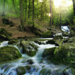 Forest waterfall — Stockfoto #15551939