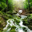 Forest waterfall — Stock Photo #15551971