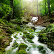 Stock Photo: Forest waterfall