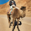 Bedouin on camel - Stockfoto
