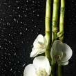 Orchid and bamboo grove on black background — Stock Photo