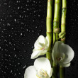Orchid and bamboo grove on black background - Stock Photo