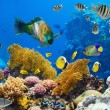 Coral colony and coral fish - Stock Photo