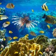 Coral colony and coral fish — Stock Photo #15557241