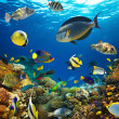 Coral colony and coral fish — Stock Photo #15557481