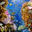 Coral colony and coral fish — Lizenzfreies Foto