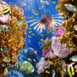 Coral colony and coral fish — Stock Photo #15557799