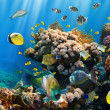Coral colony and coral fish — Stock Photo #15557967