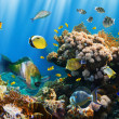 Coral colony and coral fish — Stock Photo #15557995