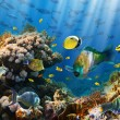 Coral and fish — Stock Photo #15558081