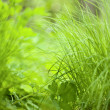 Fresh thick grass — Stock Photo