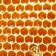 macro d'abeille travail sur honeycells — Photo