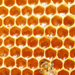 Foto de Stock  : Macro of working bee on honeycells.