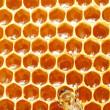 Makro Çalışma arı honeycells üzerinde — Stok fotoğraf
