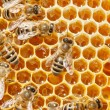 Macro of working bee on honeycells. — Zdjęcie stockowe