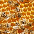 Macro of working bee on honeycells. — Stock Photo