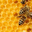 Macro of working bee on honeycells. — Stock fotografie #15558903